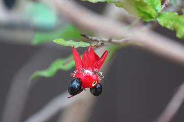 H30-8-13 ミッキーマウスの木�