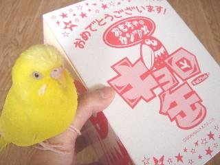 キョロ缶がやって来た=!