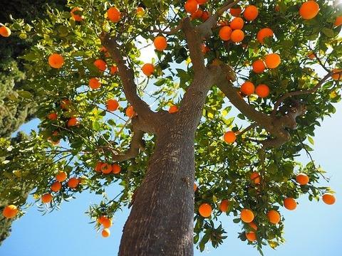 oranges-1117644_640
