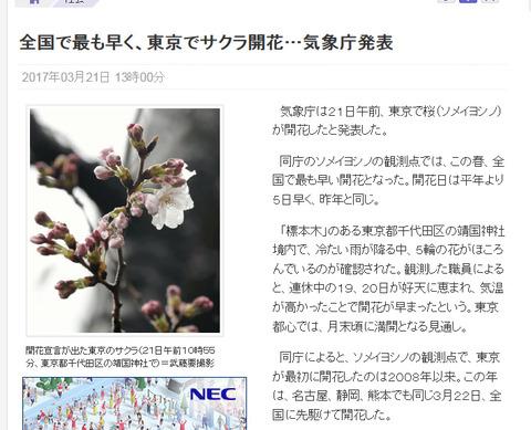 東京 開花