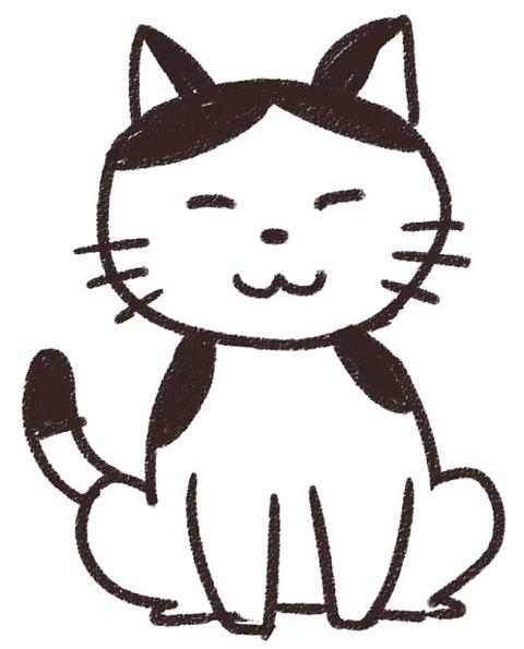 animal_cat2