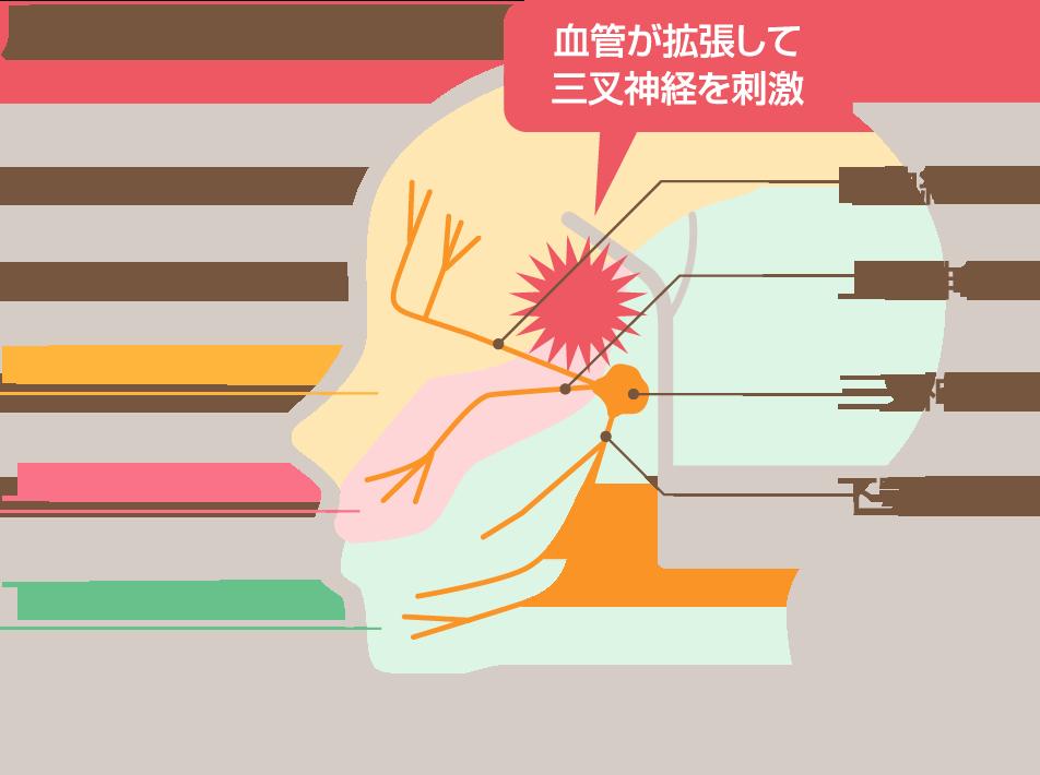 3_3_神経系の図