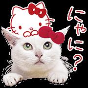 0202_Anago Kitty_sticker
