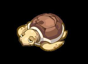 新動物ウミガメ