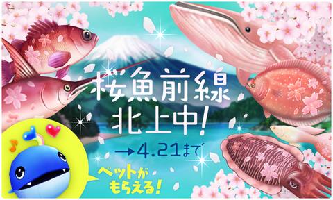 bnr_pop_sakura