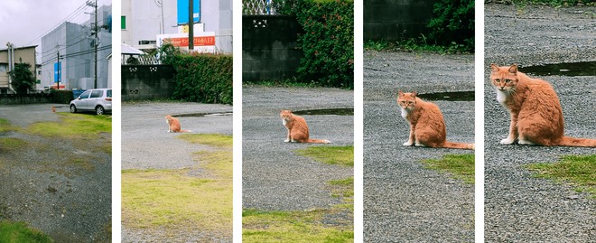 猫に近づかなくても