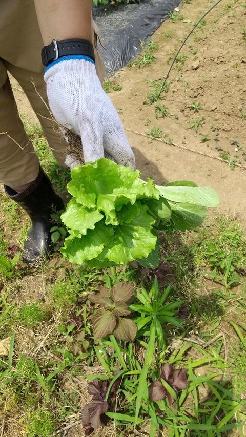 農業部_210611_8