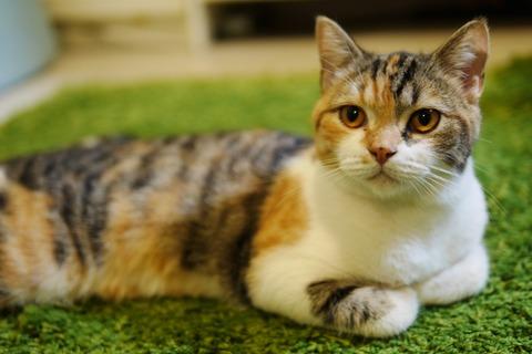 cat-slave-1763057_1920