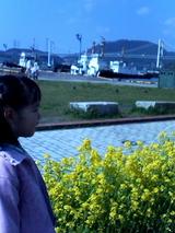 菜の花と関門橋