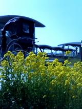 菜の花と人力車