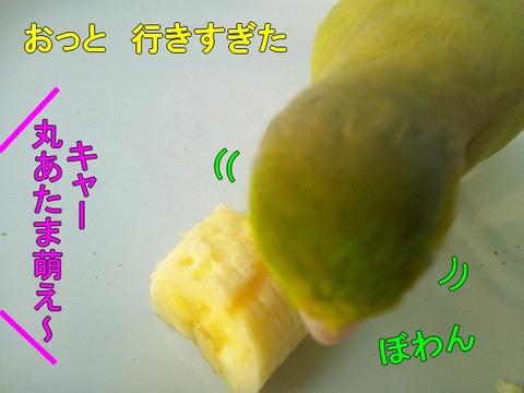 DSC_6517-1