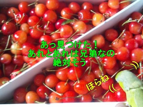 DSC_0038-1
