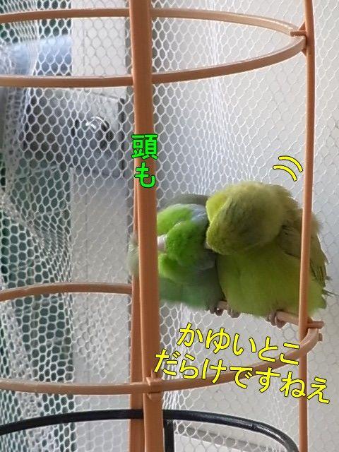 RIMG1723-1