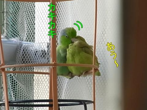 RIMG1716-1