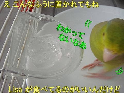 DSC06558-1