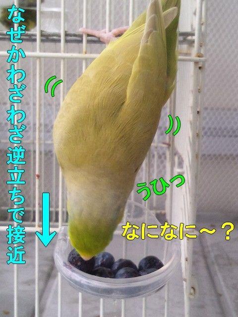 DSC_0065 (2)-1