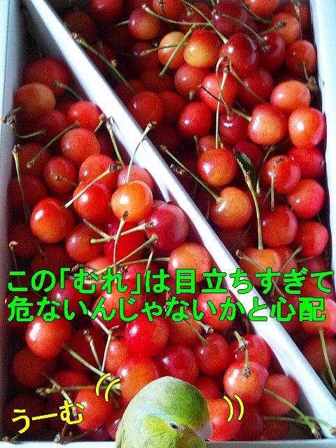 DSC_0025-1