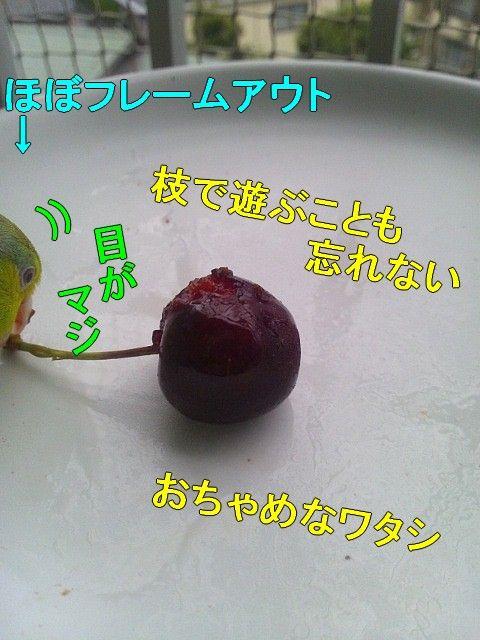 DSC_0289-1