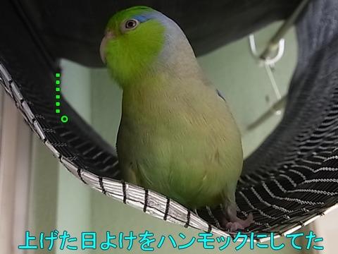 RIMG0136-1