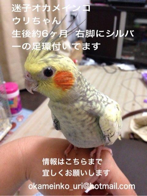 20131024キンカラブさんのウリちゃん