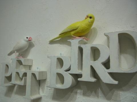 RIMG8844