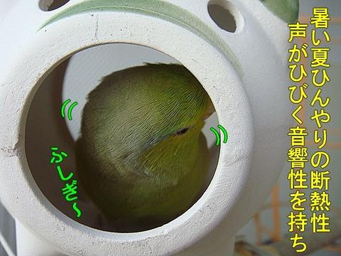 DSC06591-1