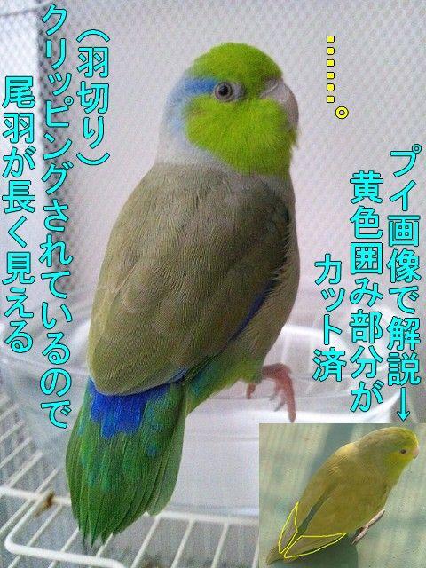 DSC_0132-1