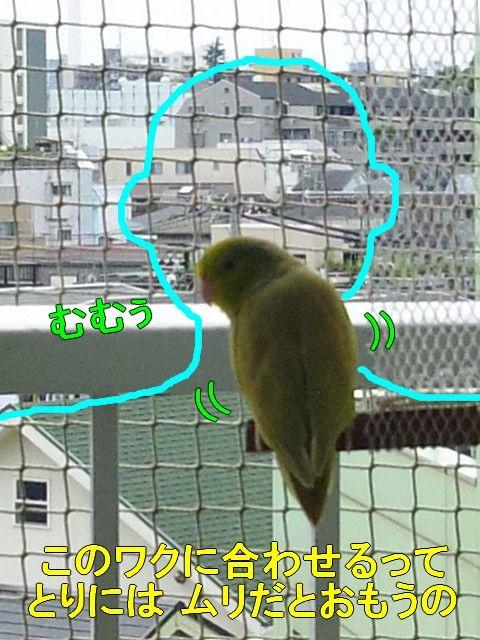 DSC_6538-1