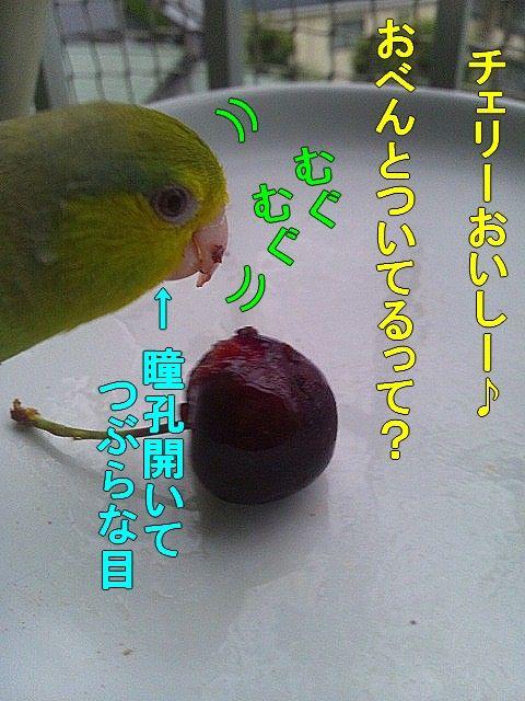DSC_0290-1