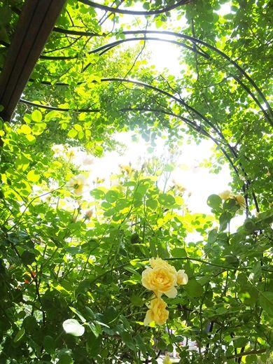 blog-DSCF1515-light