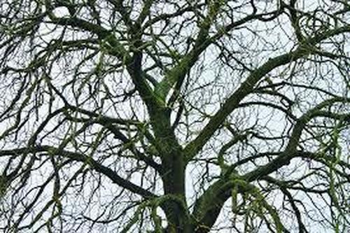 0bare trees