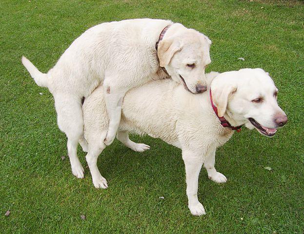 0dog mounting