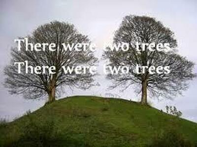 0two trees