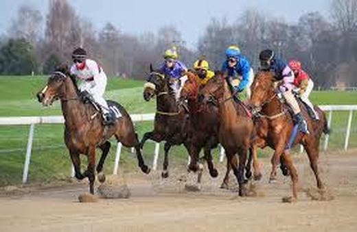 0race horse1