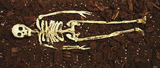 0skeleton in the soil