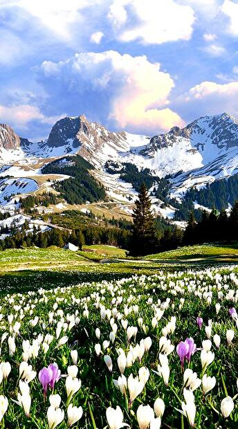 0beautiful mountains and flowers