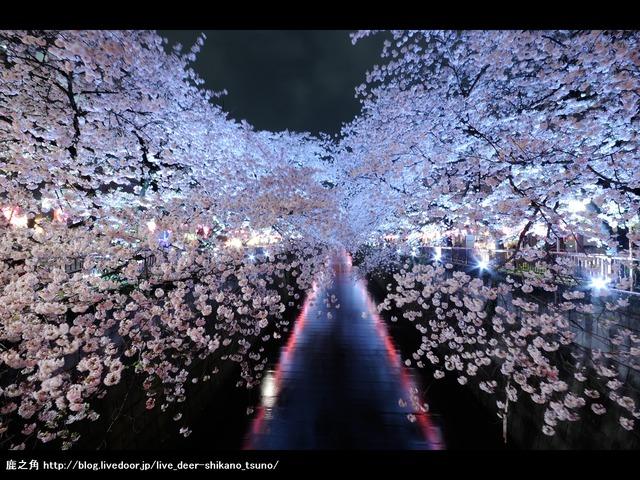 目黒川桜ライトアップ