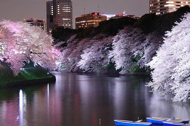 夜の千鳥ヶ淵 : 春!千鳥ヶ淵で ...