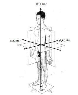 人體的軸與面