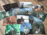 小西修氏のポストカードの売上は、多摩川の猫救済に役立てられます。