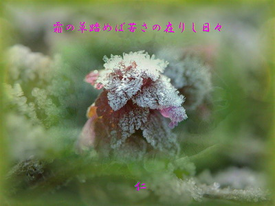 v13z010402simonokusafumebanigasanoarisihibi1pi