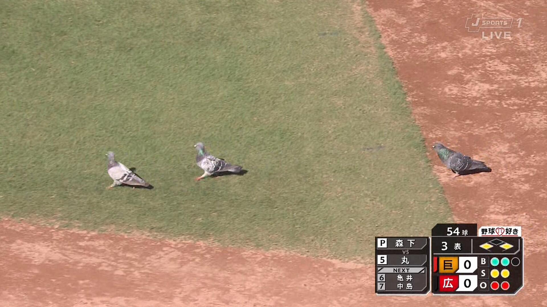 マツダスタジアム、鳩が飛び回り試合が中断するハプニング
