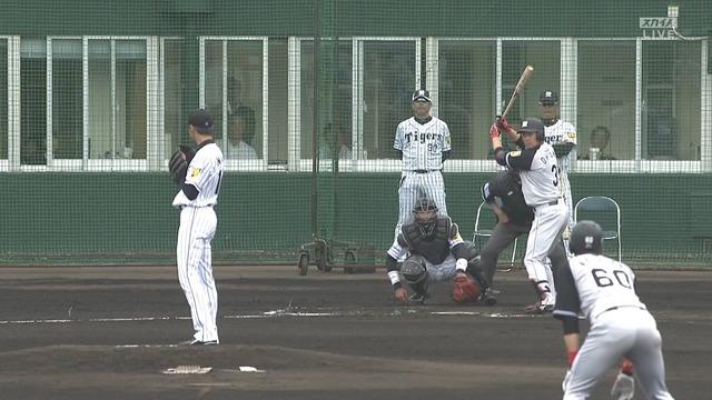 阪神・大山(15-0)、打席へ