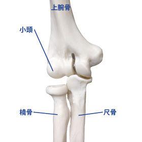 elbow5