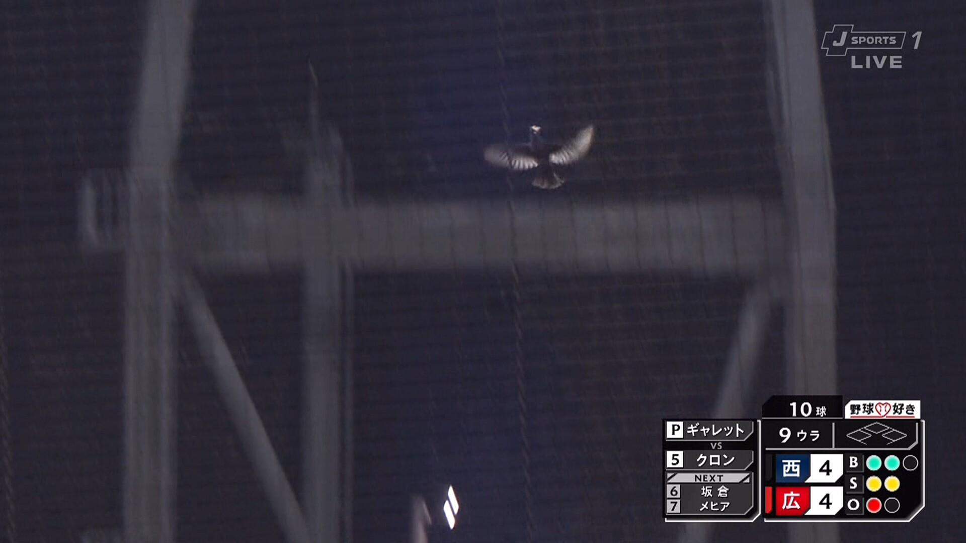 マツダスタジアム、鳥さん乱入で試合が一時中断