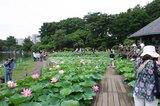 千葉公園(2)0701