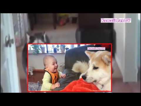 【犬猫動画】最高におもしろ犬と赤ちゃん 謎の会話動画特集・どっちも可愛すぎる  - 長さ: 9:28。
