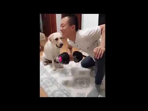 【犬猫動画】2020「かわいい瞬間」面白い動物, 猫のハプニング,失敗動画集,かわいい犬,かわいい猫 #  - 長さ: 4:52。