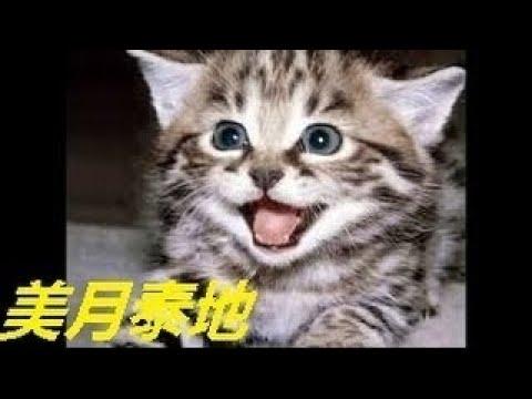 【犬猫動画】ベスト面白い動物のビデオ かわいい動物、猫、犬、サル。かわいい犬  - 長さ: 30:35。