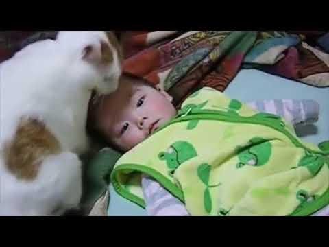 【犬猫動画】赤ちゃん好きな猫と、放っておいてほしい赤ちゃん!!笑  - 長さ: 0:23。
